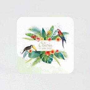 faire-part-naissance-perroquets-des-iles-TA05500-2000056-09-1