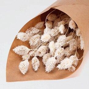 fleurs-sechees-communion-phalaris-blanc-TA482-210-09-1